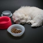Sleepypod Yummy Bowls for Dog Travel
